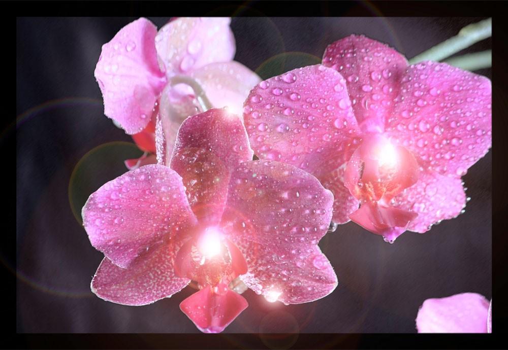 LED Leuchtbild Wandbild Beleuchtung Bild Blume Orchidee Eglo 75036